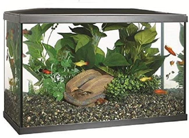 descripcion acuario marina